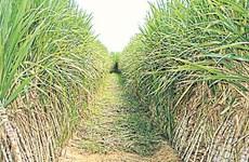 Thailand promotes bioeconomy