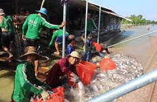 Vietnam, India seek to promote fishery cooperation