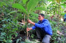Young activists plant trees to prevent floods, landslides