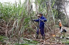 Local sugar industry calls for fair competition