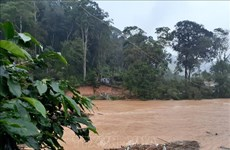 Four killed, two missing as flash floods hit Central Highlands, South Central regions