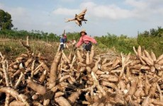 ADB approves loans worth 70 million USD for Cambodia's agriculture