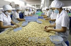 Vietnam remains world's top cashew exporter