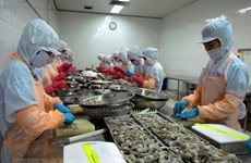 ASEAN holds potential for Vietnam's shrimp exports