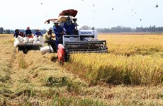Dong Thap expands high quality rice cultivation