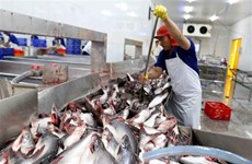 Tra fish export value hits 1.2 billion USD in 10 months