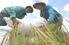 Vietnam listed in high human development category group: UNDP new report