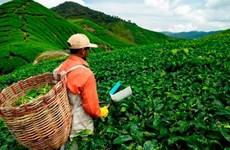 Malaysia to adopt smart farming