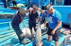 Kien Giang enjoys over 10 percent rise in aquatic production