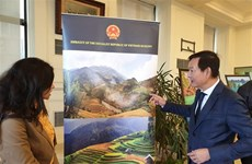 Vietnamese culture on show in Egypt's second-largest city