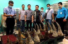 Over 90kg of suspected rhino horns seized at Tan Son Nhat airport