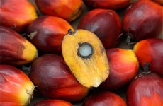 Malaysia: Palm oil goes down from eight-year high