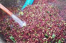 Vietnam develops high-quality coffee