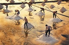Salt-making craft in Bac Lieu named national heritage