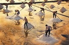 Salt-making craft in Bac Lieu named national heritage