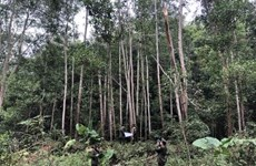 Forestry sector targets 14 billion USD from exports in 2021