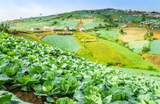 Thailand: urban farm model improves livelihoods of poor people amid COVID-19