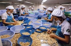 Global foothold the target for Binh Phuoc cashew nuts