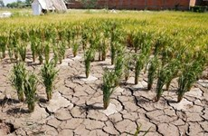 Cambodia completes updated NDC to convention on climate change