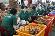 Fruit and vegetable exports hit over 3.2 billion in 2020