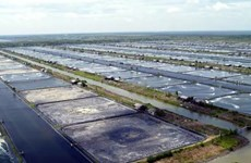 Indonesia aims to become world's largest vannamei shrimp producer