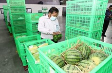 Fruit and vegetable purchasing, distribution centre opens in Tien Giang