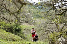 Over 4,300 runners to race in Vietnam Trail Marathon in Son La