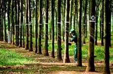 Vietnam Rubber Group posts rising revenue and profit