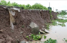 Bac Lieu: 838 mln USD earmarked for anti-erosion efforts by 2030