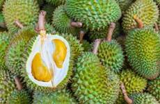 Malaysian durian products enter Japanese market