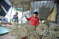 Ca Mau wants to reduce poverty rate by 0.3 percentage points this year