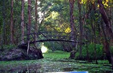 Tra Su cajeput forest - 'The Green Lung' in Mekong Delta