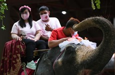 Thailand: couples tie the knot on elephants on Valentine's Day