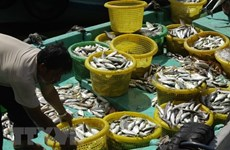 Kien Giang: 12.7 trillion VND for marine aquaculture