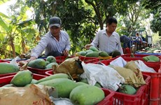 Trade surplus from agro-forestry-fisheries hit 1.37 billion USD in two months