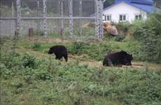 Progress seen in settlement of wildlife crimes: insider