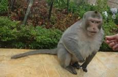 Da Nang urges protection of endangered primate population