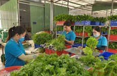 Agricultural cooperatives benefit hugely from investment in technology: experts