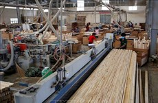 Bright outlook for domestic timber industry