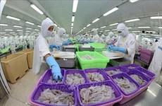 Vietnam to become world's key shrimp producer