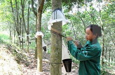 Rubber exports rocket in two months