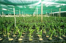 HCM City set to become high-quality agriculture hub by 2030