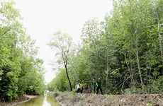 Ca Mau expands forest coverage, improves farmers' incomes