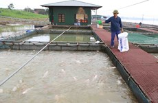 Long An targets at least 60,000 tonnes of aquaculture production
