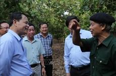 Binh Phuoc urged to develop cashews as main crops