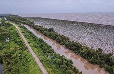 Experts seek measures to promote Mekong Delta's sustainable growth
