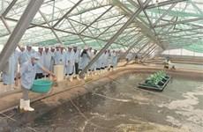 Bac Lieu strives to become national shrimp industry's centre