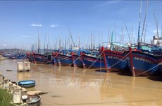Binh Dinh: All fishing ships must obtain food safety certificates by end of June