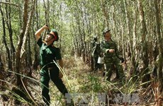 Ca Mau: Large areas of forest at high risk of fire