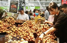 Activities planned for Hanoi stimulus programme